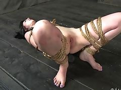 Torment Session For Lovely First-timer Honey Coral Aorta. Hd Flick
